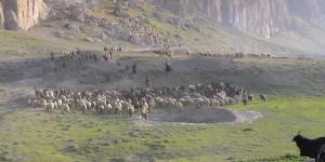 Ghanimat Azhdari/CENESTA